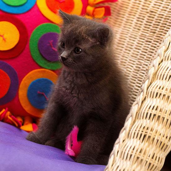 walmart kitchen decor mats and rugs cute grey cat names