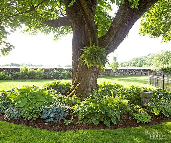 gardener's guide hostas
