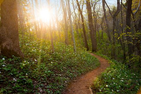 A Spring Hike in Ohios Appalachian Foothills  Midwest Living