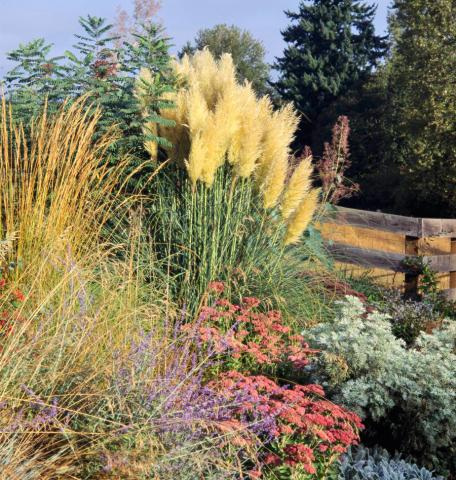 ornamental grasses midwest