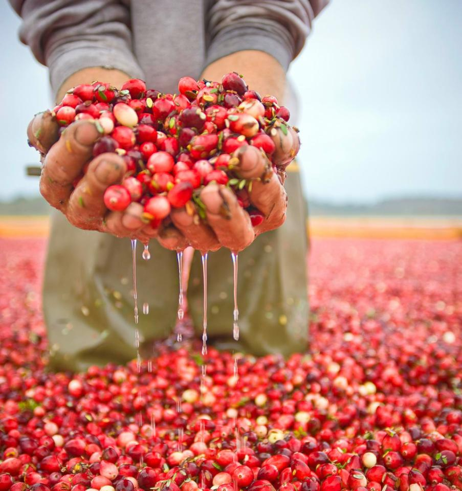 Wisconsins Fall Cranberry Harvest  Midwest Living
