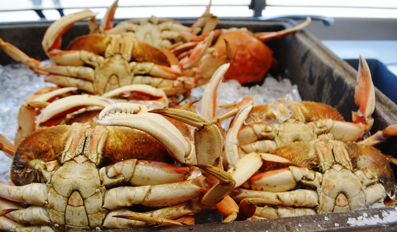 Fresh San Francisco Dungeness Crab