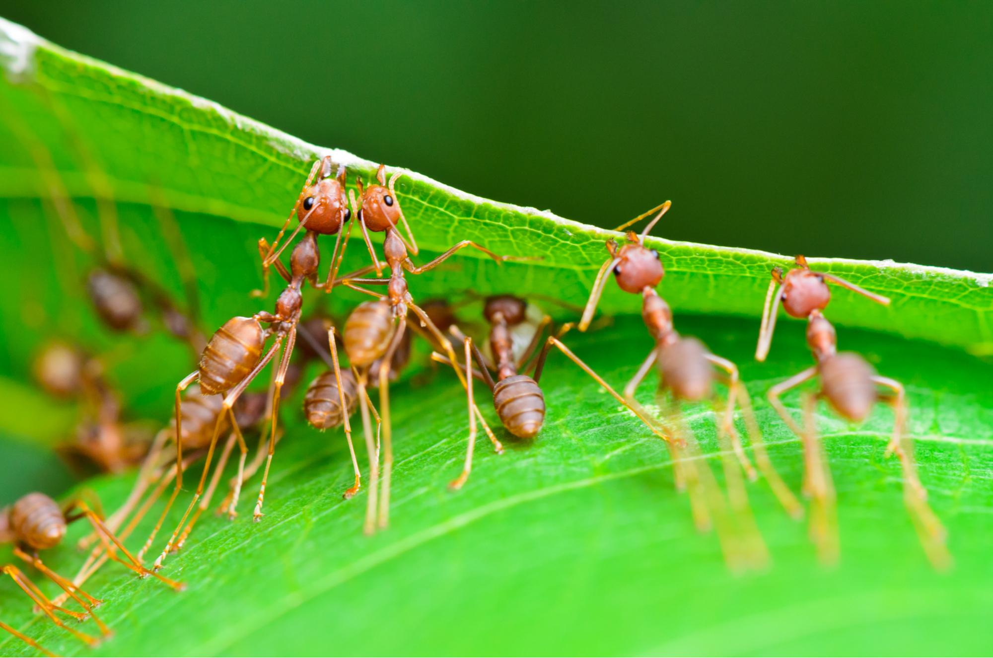Worksheet Biological Control