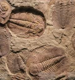 Lesson Worksheet:Fossils   Nagwa [ 1334 x 2000 Pixel ]