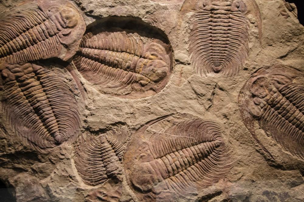 medium resolution of Lesson Worksheet:Fossils   Nagwa