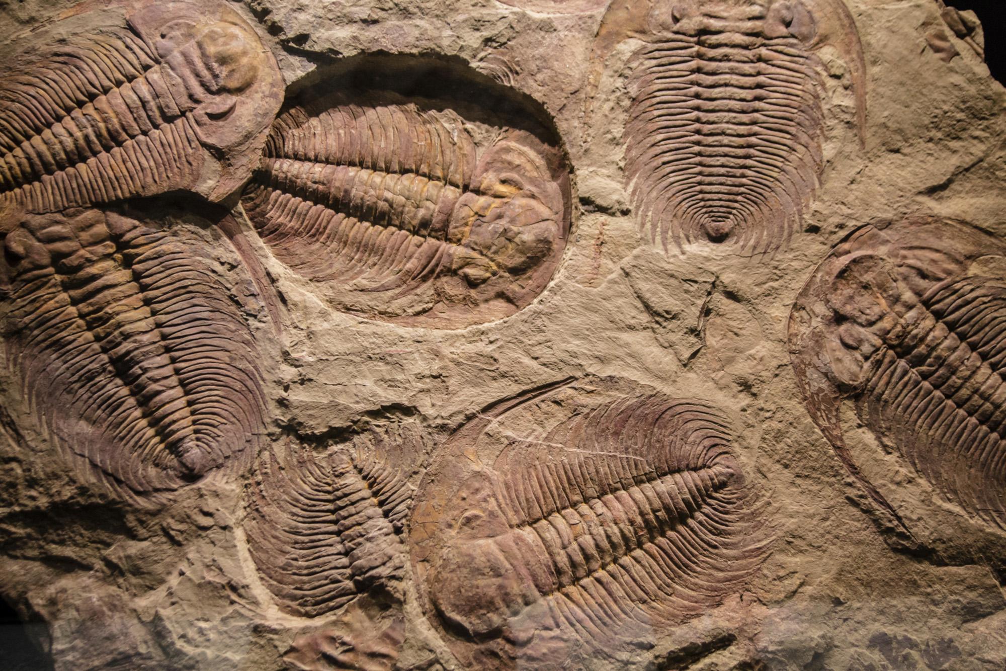 hight resolution of Lesson Worksheet:Fossils   Nagwa