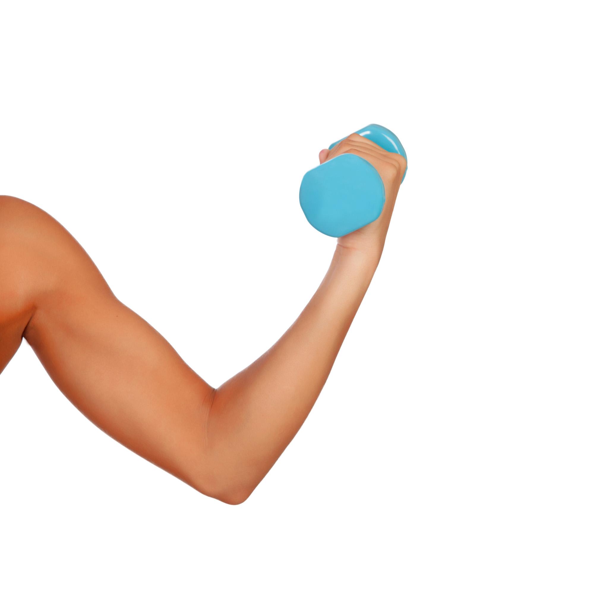 Worksheet Muscles
