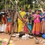 Tamil Nadu Celebrates Pongal With Traditional Fervour The