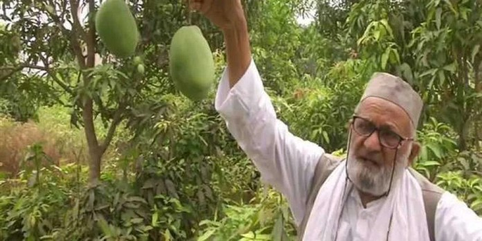 Portly and sweet: Mango man honours Home Minister with 'Shah' variety- The  New Indian Express