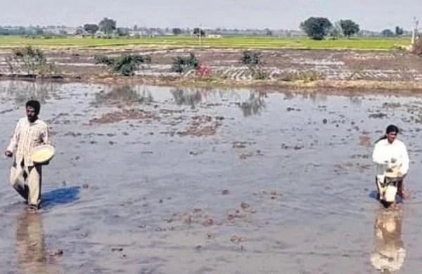 tel तेलंगाना के किसान ने 'वेद खेती' तकनीक के साथ सोना खरीदा