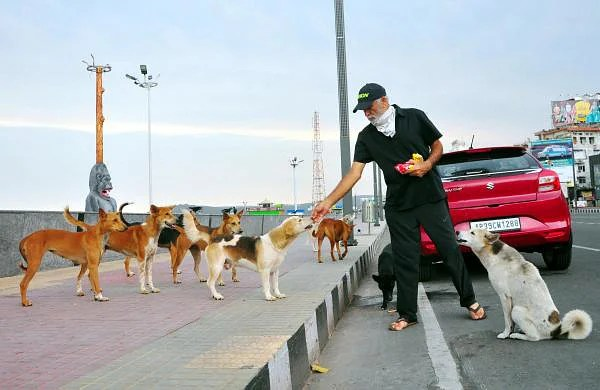 HC seeks Centre, AAP govt stand over feeding stray animals during COVID-19 lockdown