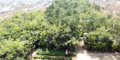 A timely topic for present times. Bengaluru Gets Largest Miyawaki Forest The New Indian Express
