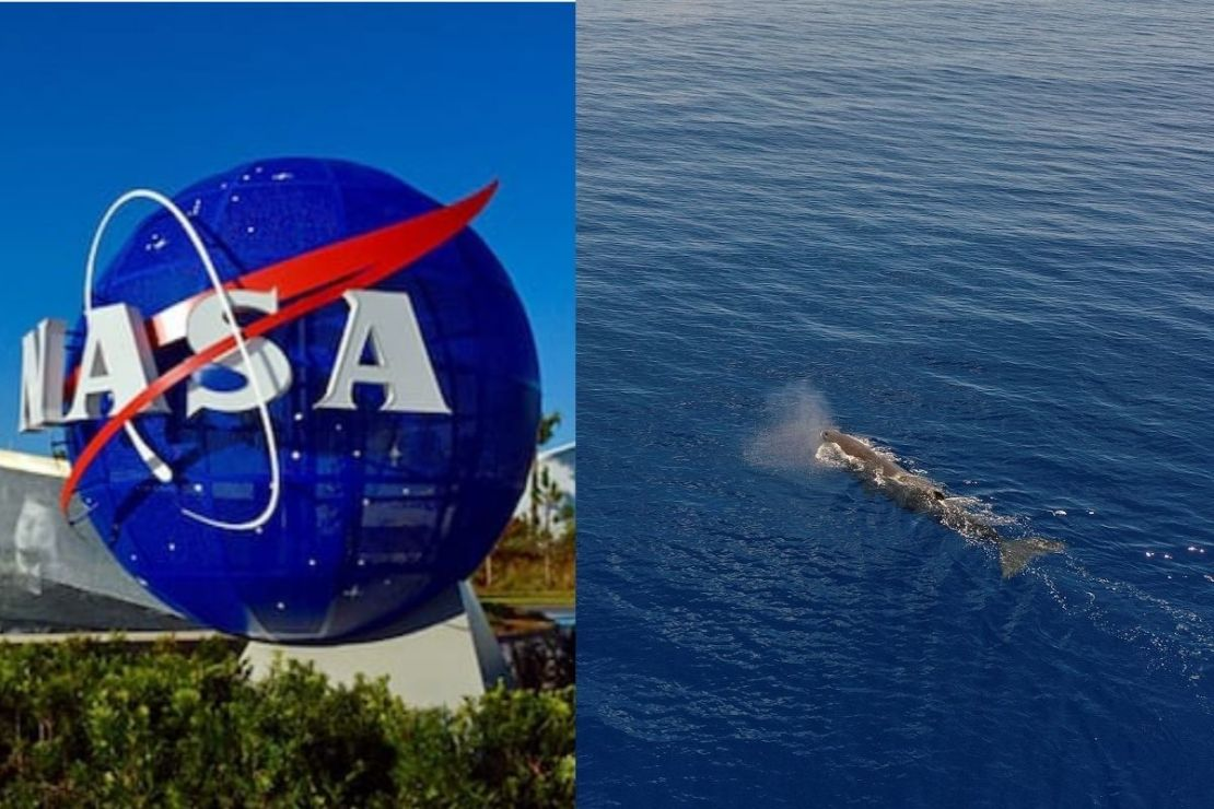 The video led to more speculations and netizens on Twitter also wondered what did the space agency found in the ocean that led them to explore the space instead.
