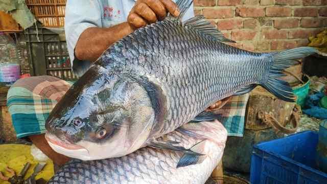 मछली को दौलतदिया फेरी टर्मिनल से सटे मछली बाजार में ले जाया गया।  वहां मछली का वजन किया जाता है।  उसके बाद कतला मछली की नीलामी शुरू हुई।  इच्छुक खरीदार एक के बाद एक बोली लगाते रहते हैं।  आखिर में मछली 25,400 रुपये में बिकी।