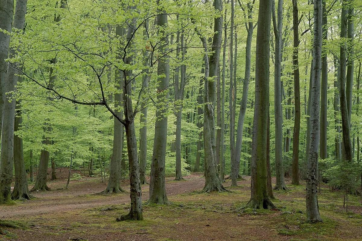 trees share vital goodies