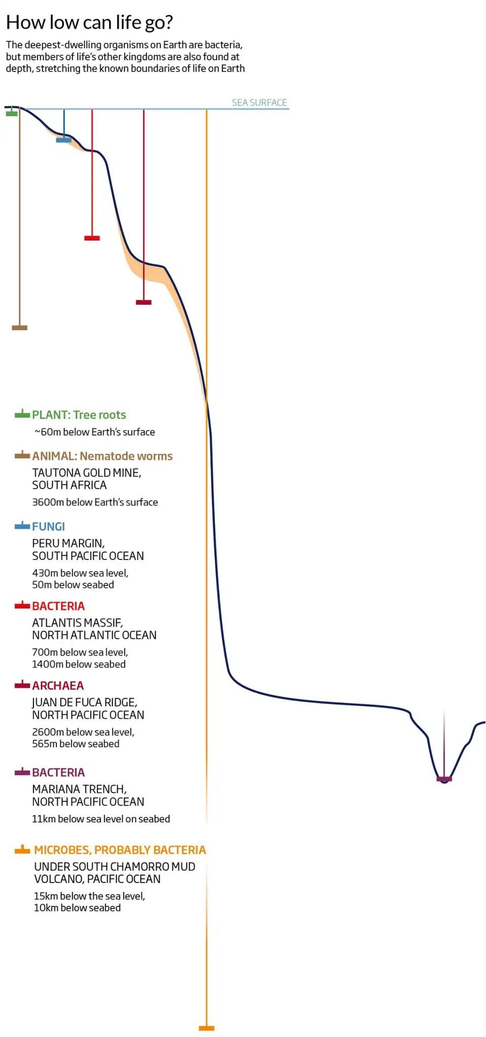 medium resolution of diagram of deepest dwelling organisms on earth
