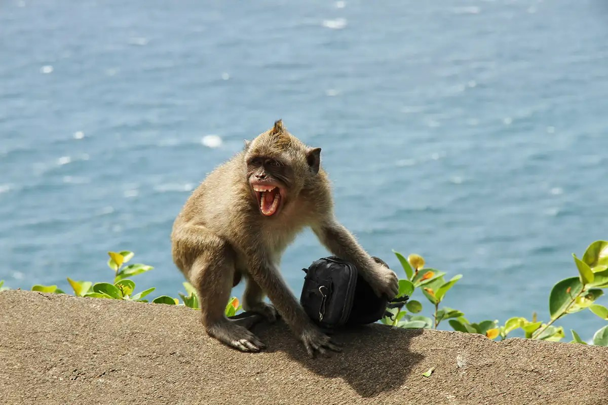Monkey steals coronavirus samples from Indian medical hospital in Merut