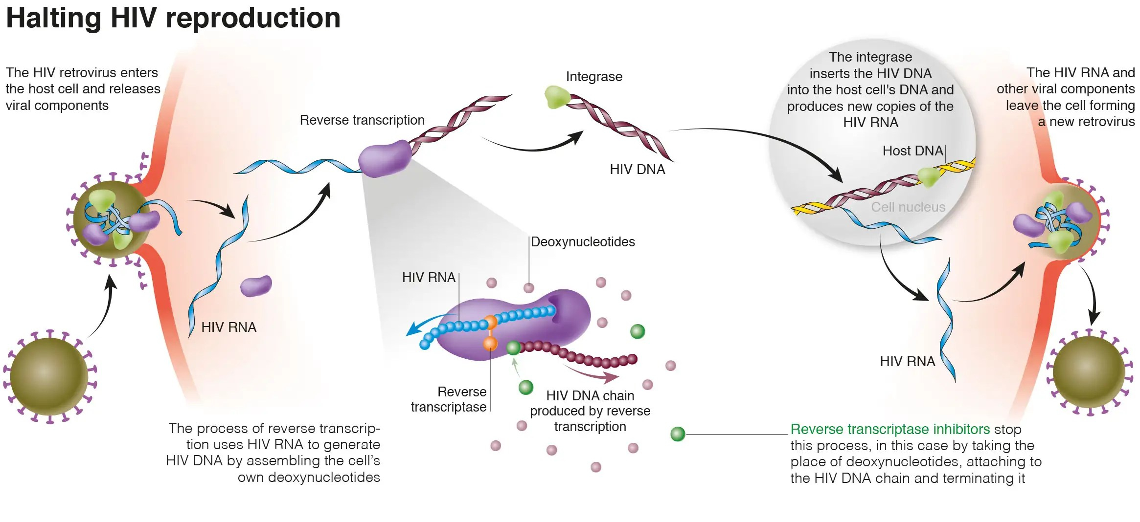 How Clever Biochemistry Is Tackling Hiv