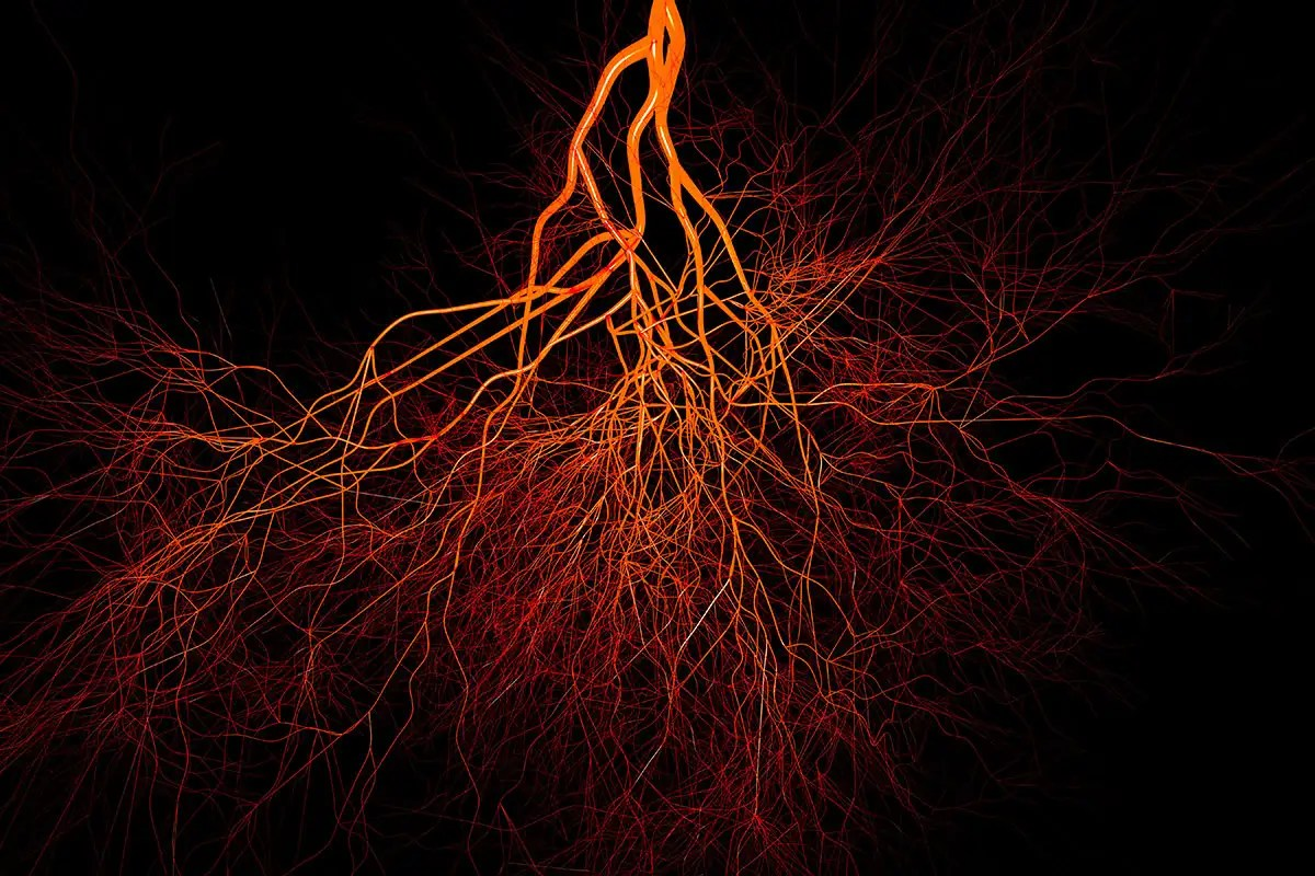 We Ve Discovered A New Type Of Blood Vessel In Our Bones