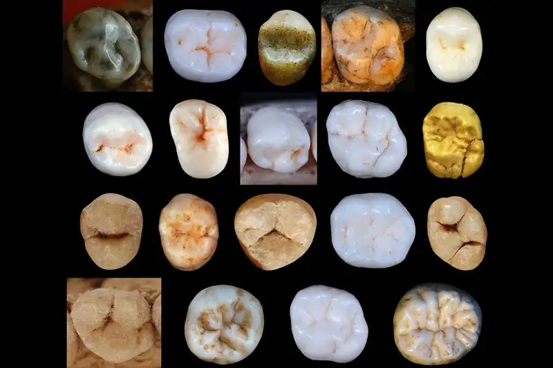 Fossil teeth could change our understanding of human evolution
