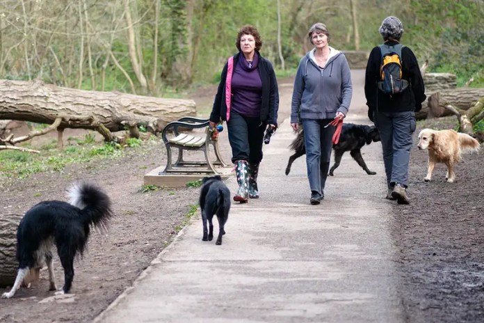Dog walking may put some people at risk of catching Lyme disease