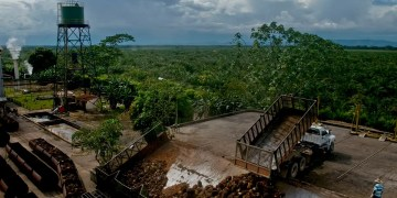 Palm oil from Colombia is more climate and wildlife friendly