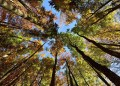 How everyone decided trees will save the planet  and why they wont