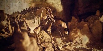 Europes cave bears may have died out because of their large sinuses
