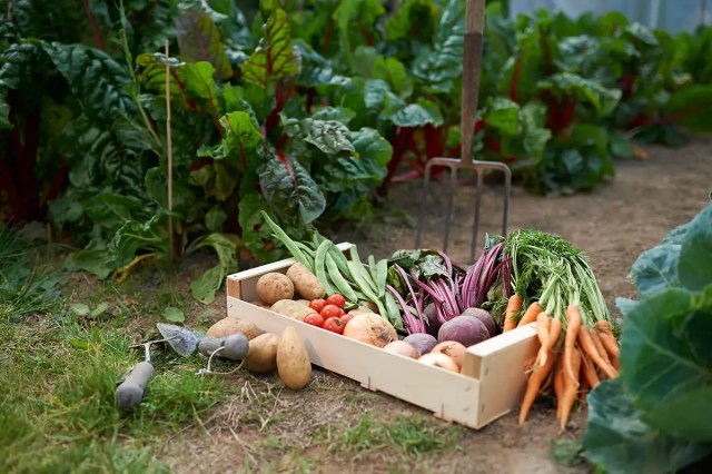 Can you really grow enough fruit and veg to be self-sufficient?