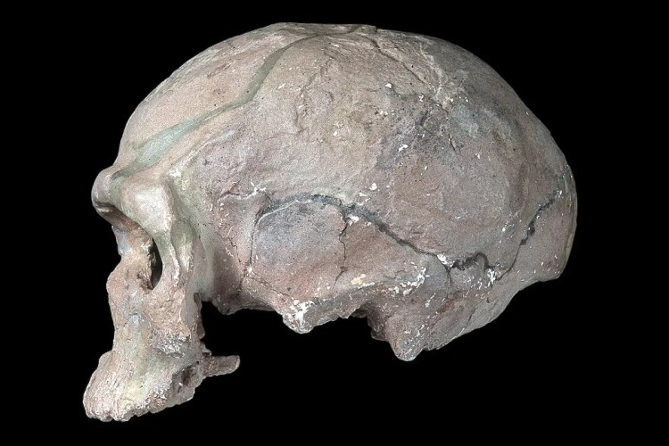 Human evolution: The astounding new story of the origin of our species