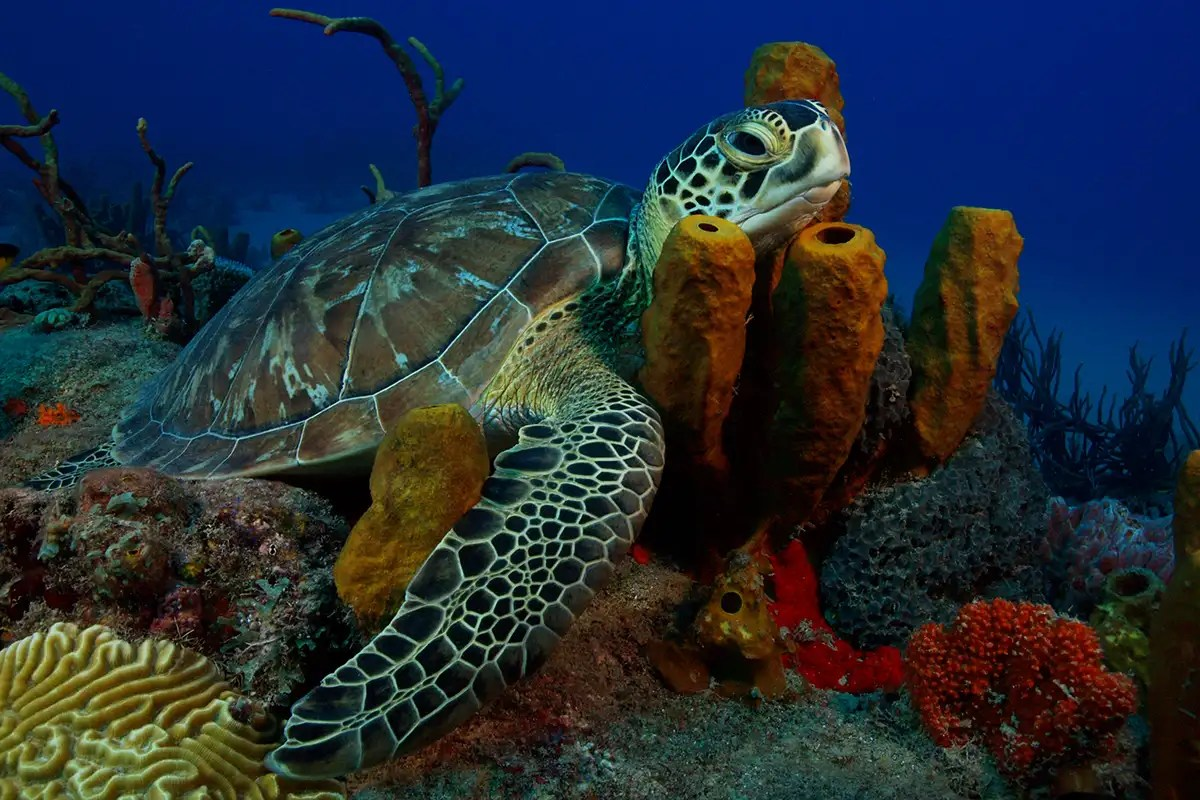The epic journeys of green sea turtles revealed by 50 years of data
