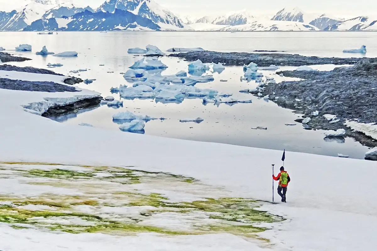 Algae is now growing on melting Antarctic snow due to climate change
