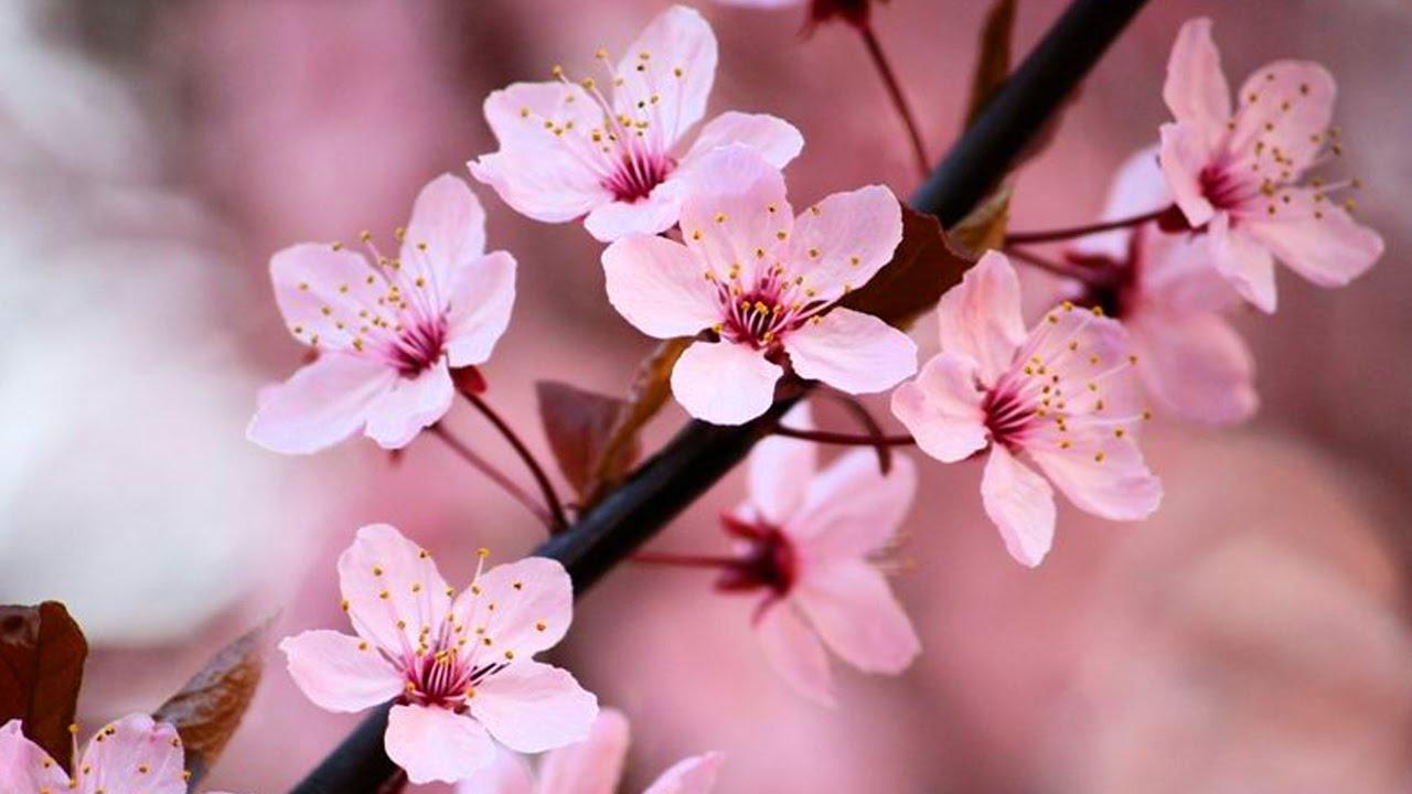 Τα 10 πιο όμορφα λουλούδια στον κόσμο - Φωτογραφία 3