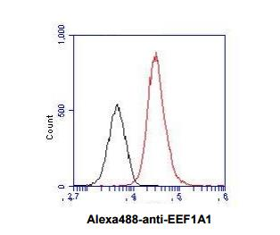 beta-Actin Antibody (AC-15) (NB600-501): Novus Biologicals