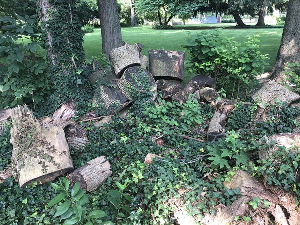 free tree logs for