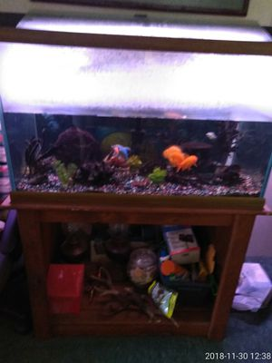 new and used fish