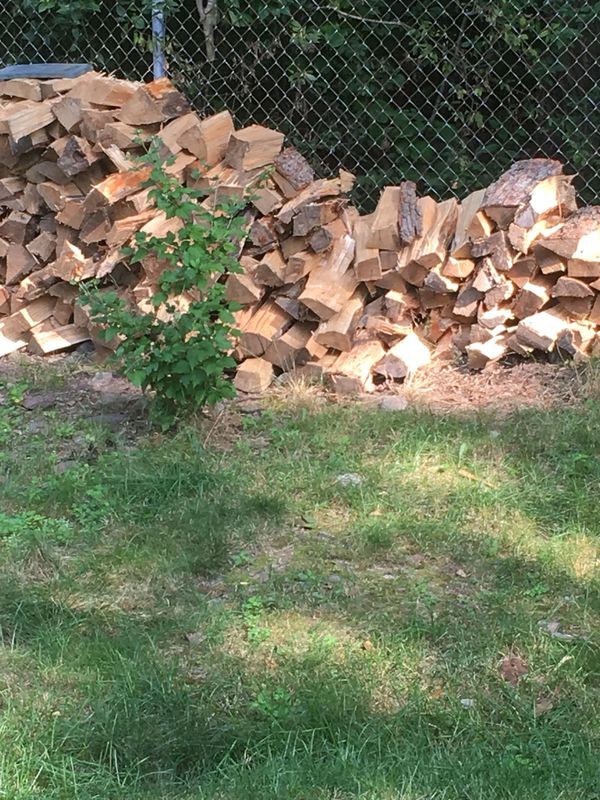Maple Logs For Sale