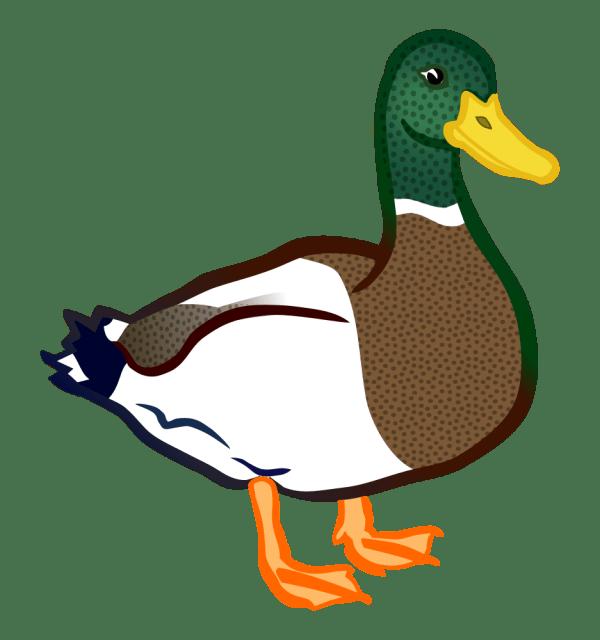 onlinelabels clip art - duck