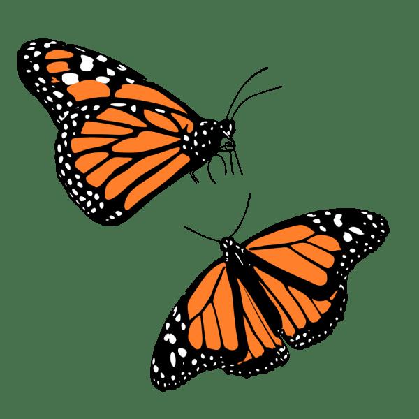 onlinelabels clip art - monarch