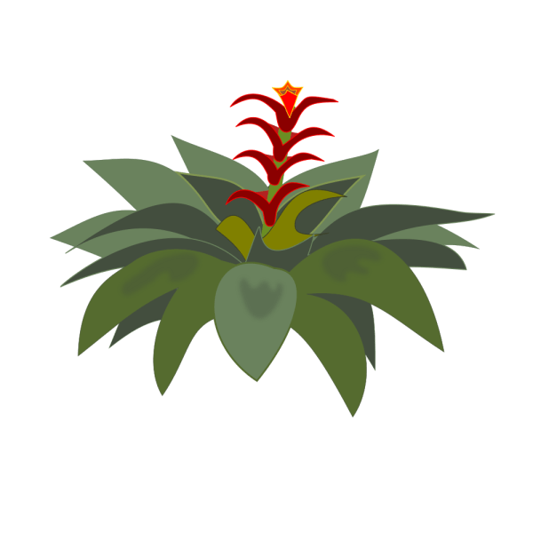Onlinelabels Clip Art - Bromelia-01