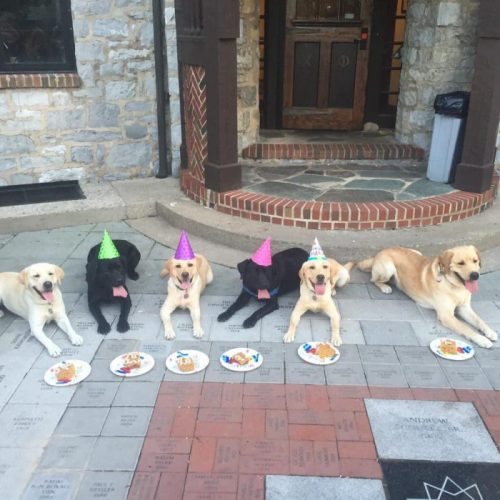 A Day In The Life Of A Susquehanna Service Dogs Trainer