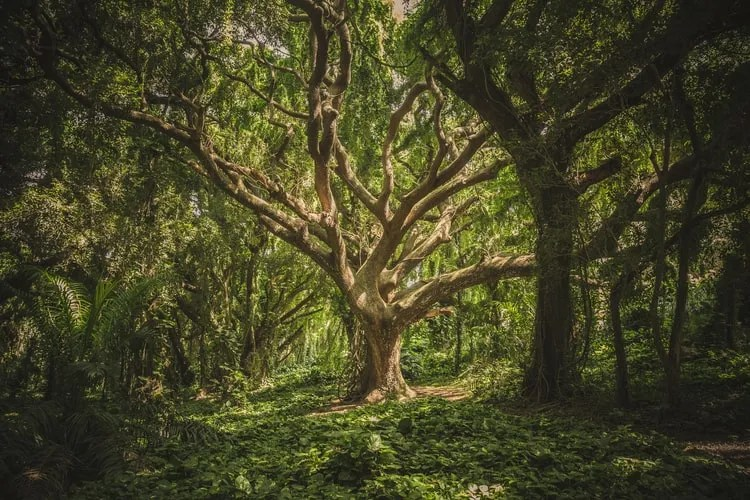 """International day of forests 2021 theme has been declared as is """"forest restoration: International Day Of Forests 2021 History Significance Theme"""