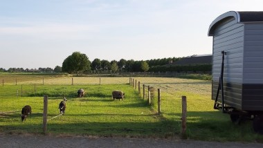 Tiny House Huren In Nederland Origineelovernachten