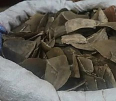 China seizes 12 tonnes of endangered pangolin scales