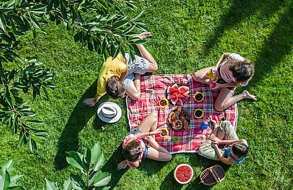 A complete plan for a stress-free picnic