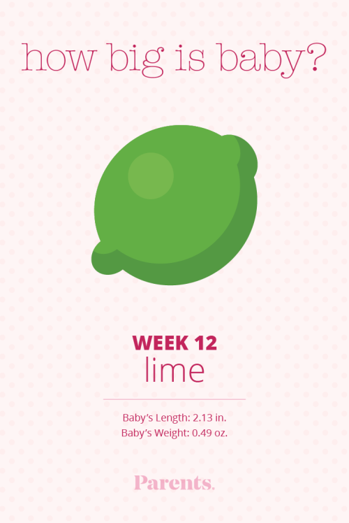 small resolution of 19 week pregnant diagram