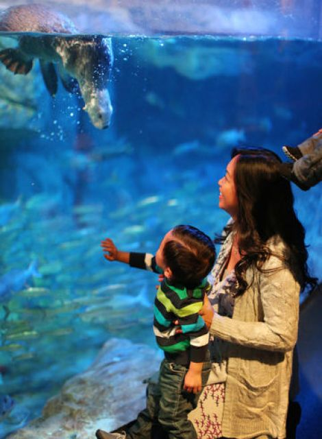 Image result for parents and kids in aquariums