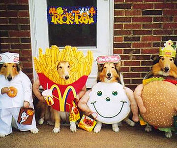 Outrageous Halloween Costumes for Pets