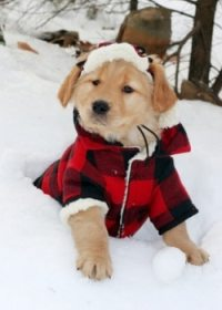 Do Dogs Need Winter Coats? 4 Tips From a Vet