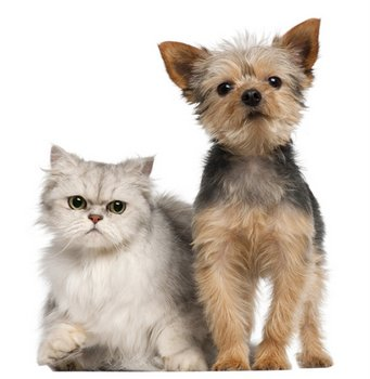 dog and a cat with pet health insurance sit beside each other.